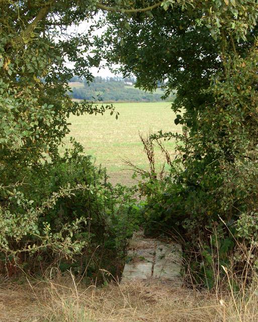 Footpath southeast from Flecknoe to Staverton (5)