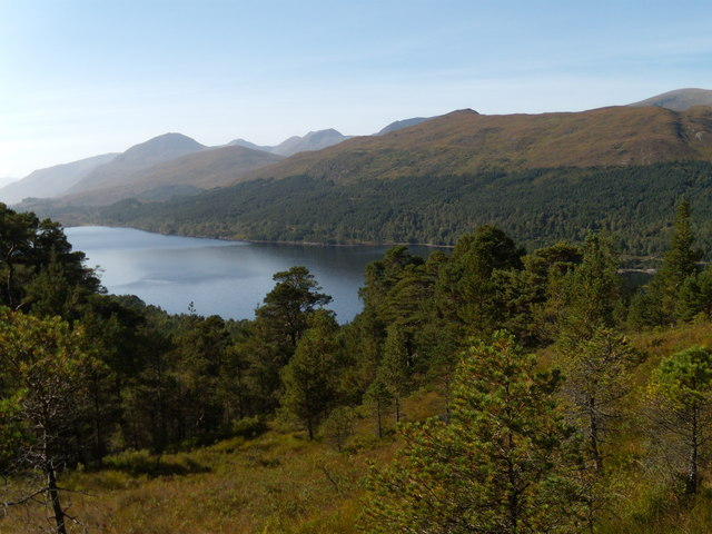 Forest in Glen Affric National Nature Reserve