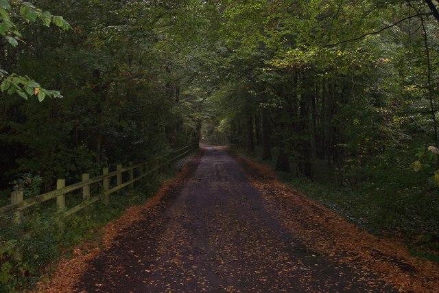 Digdog Lane through Brickyard Wood