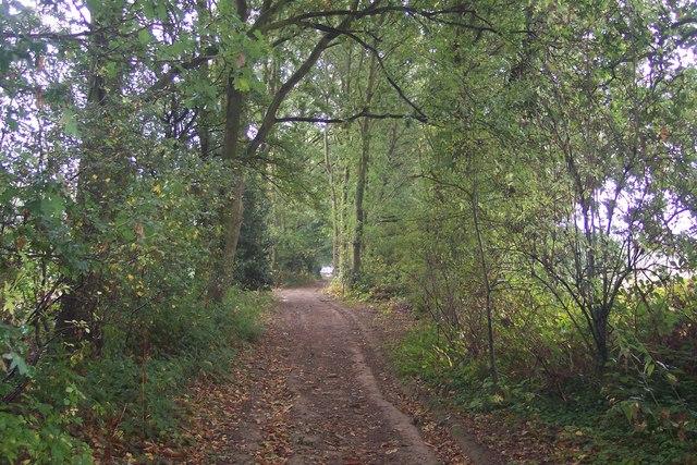 Bridleway past Saw Lodge Wood