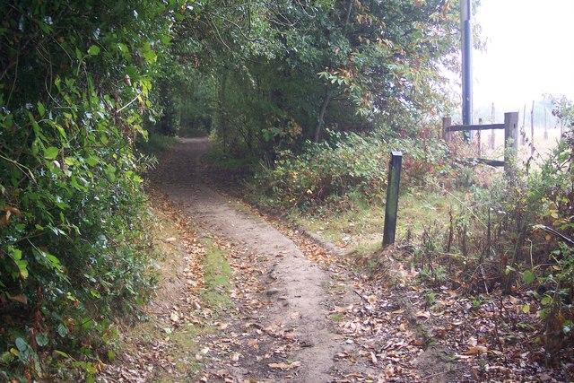 Footpath junction on Saw Lodge Wood bridleway