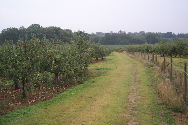 Footpath through Orchards, near Sissinghurst Castle