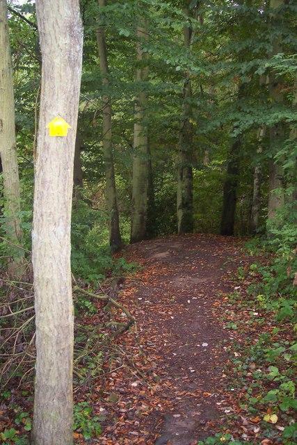 Footpath in Birch Wood