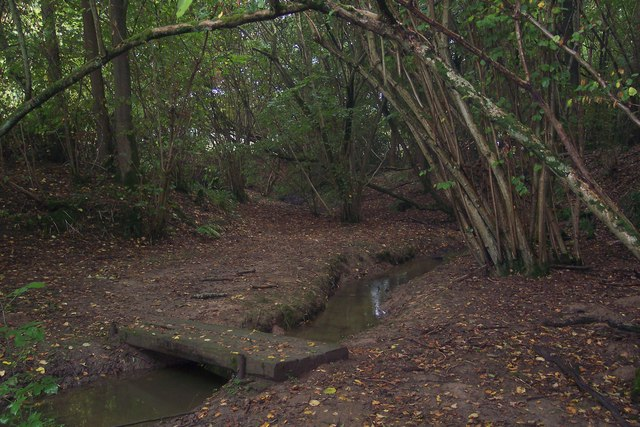 Footbridge in Birch Wood (3)