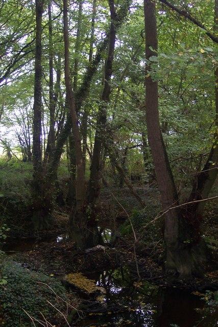 Stream in Little Ommerden Wood