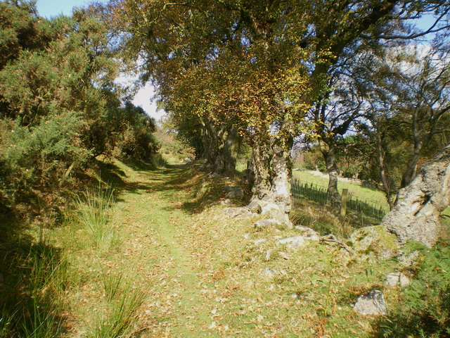 Bridleway and a line of ancient silver birch trees