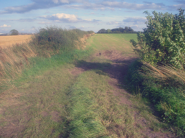 Arable land east of Normanton le Heath