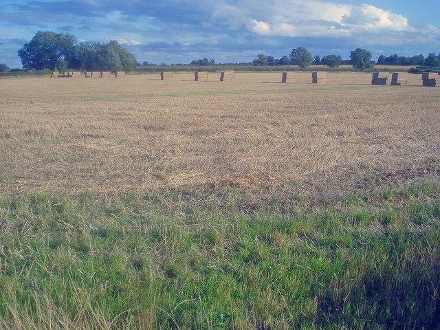 Straw bales east of Normanton le Heath