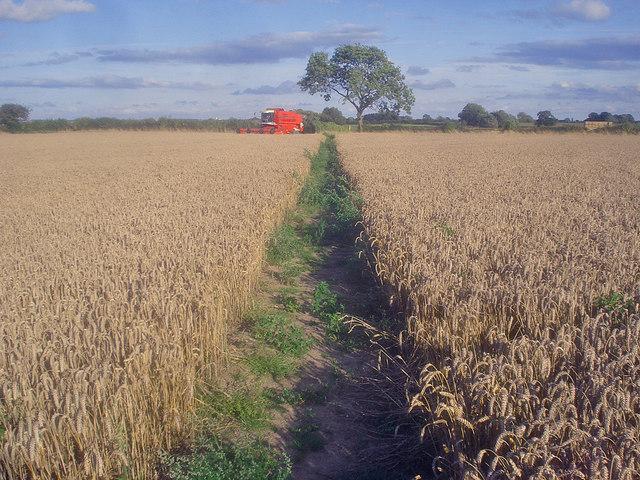 Harvesting near Normanton le Heath