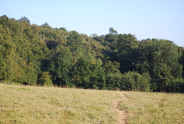 Woodland by the Greensand Way, Ide Hill