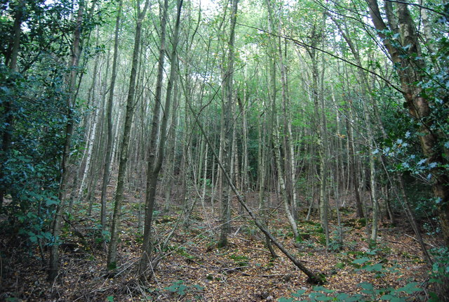 Scord's Woods, Toy's Hill