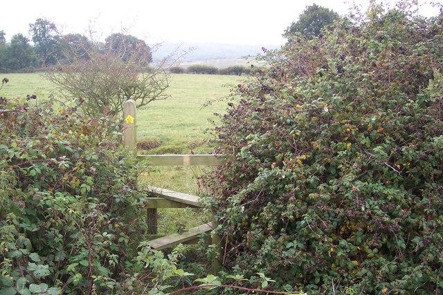 Stile near blackberry bushes