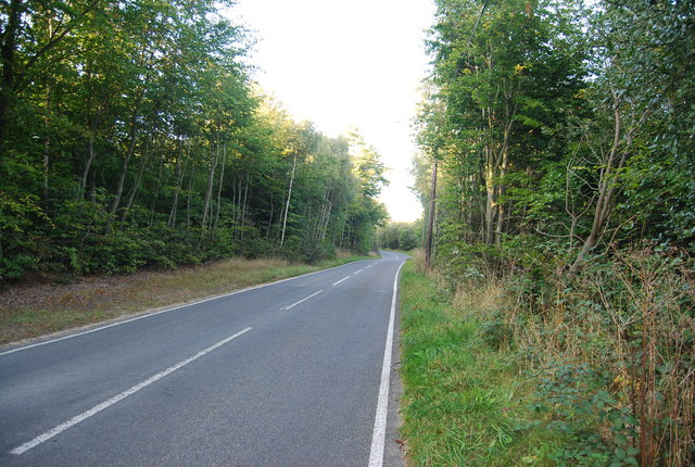 Road north of Toy's Hill