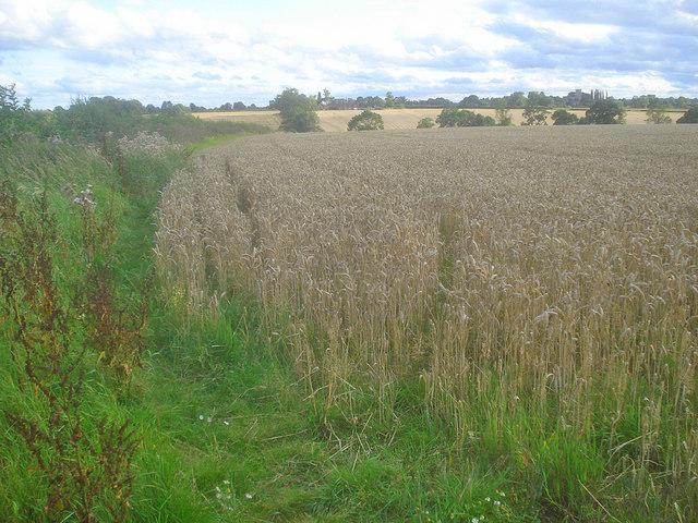 Footpath to Upper Fields