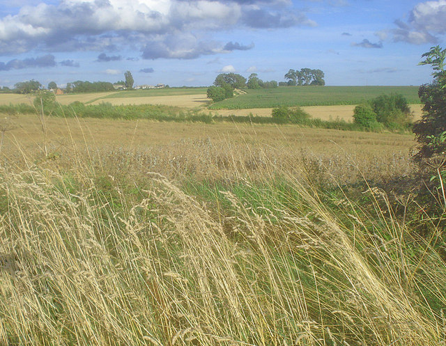 Arable land west of Heather