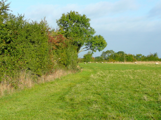 Field edge and bridleway