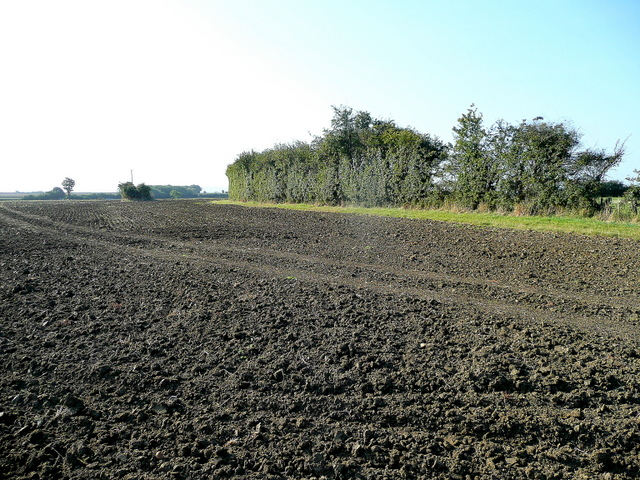 Arable land south of Bozard's Lane