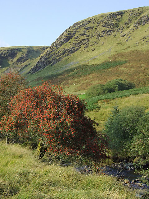 Rowan tree with crags and river