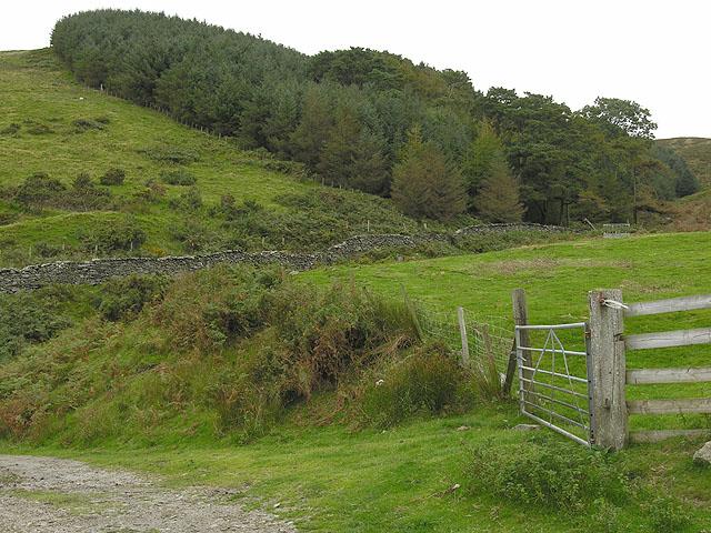 Forestry stand near the Nant Braich-y-rhiw
