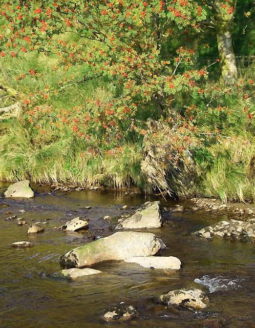 Afon Tywi below Nantyrhwch, Powys