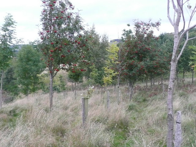 Recently planted mixed hardwood forest