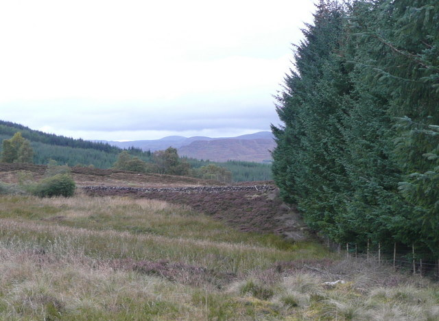 Forest edge and dry stone wall