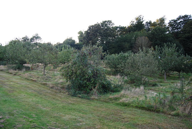 Orchard by the footpath, Chartwell
