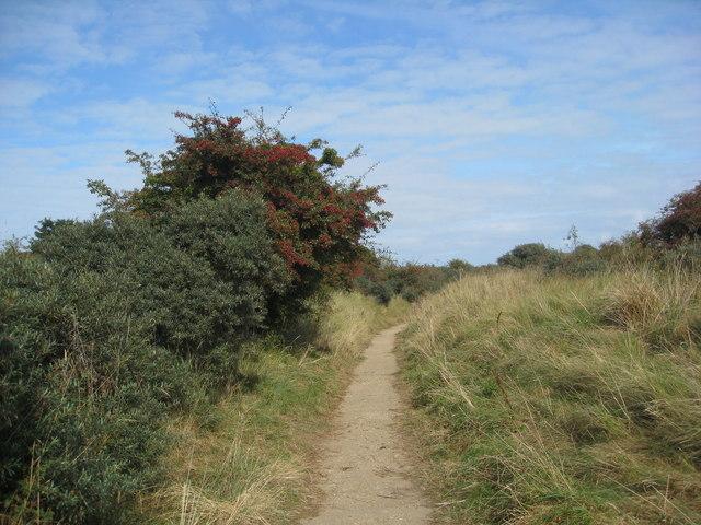 Saltfleetby - Theddlethorpe Dues NNR