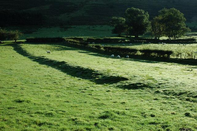 Morning sun, Cwm Cywarch