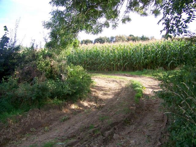 Maize, Chantry