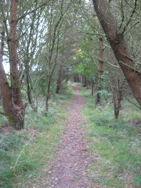 Footpath through Hetherley Clough in Tow Law