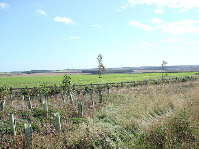 The Wolds, looking towards Grindale from the Dotterel roundabout