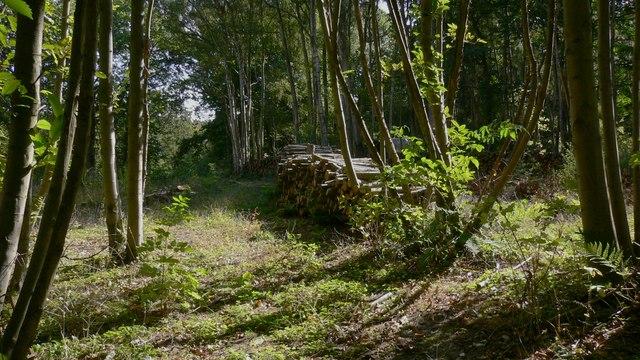 Logpiles in Hammer Wood