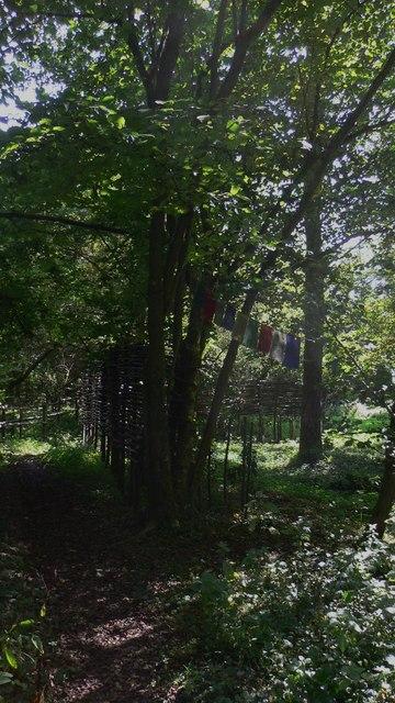 Footpath near Hammer Pond in Hammer Wood