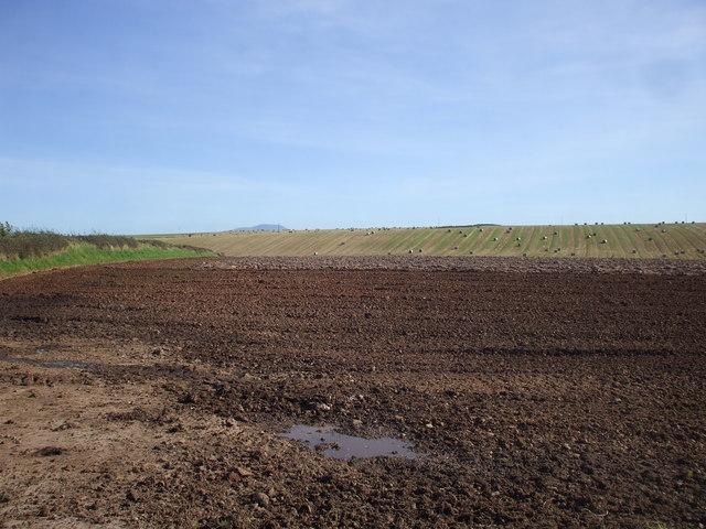 Farmland near Westnewton