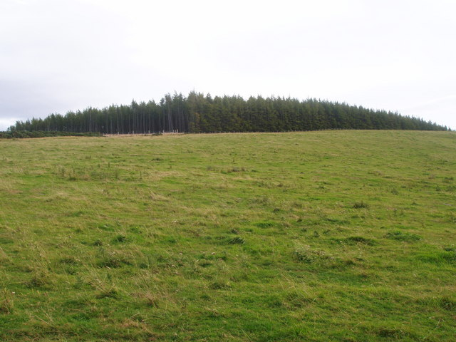Across moorland fields to part of forest on Gartly Moor