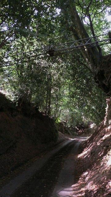 Hammer Lane near Chithurst