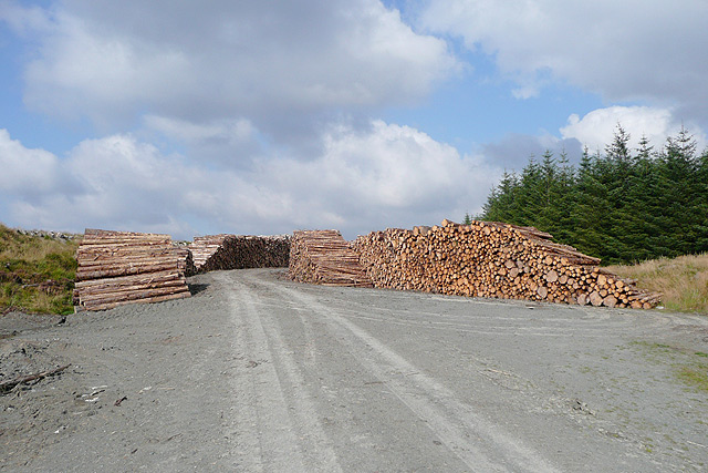 Forestry road and timber, Tywi Forest, Powys
