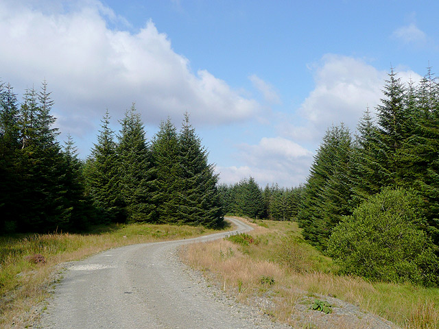 Forestry road, Tywi Forest, Powys