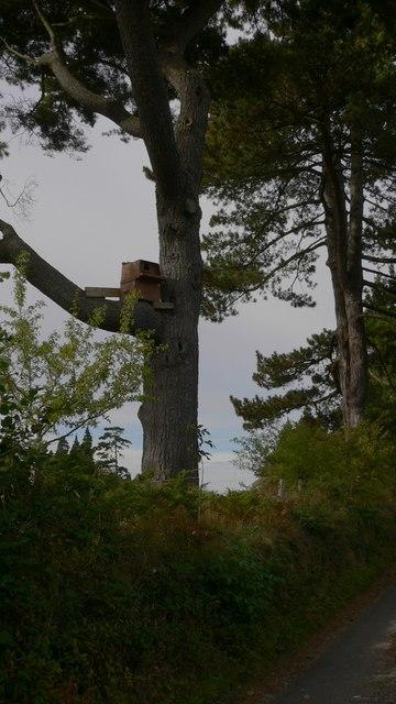 Treehouse on Tote Lane