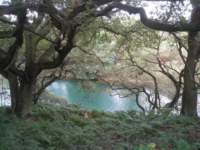 Carsington Water - Creek below Sitch Farm