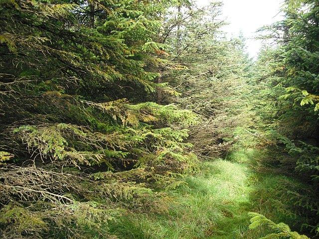 Forest, Stennishope