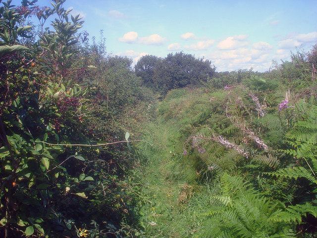 Public footpath near Pasture Farm