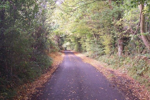 Nineveh Lane