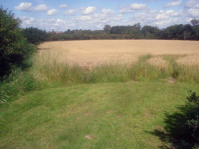 Wheat field near Pasture Farm