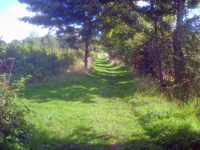 Path through Willesley Wood