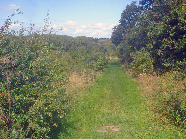 Willesley Wood