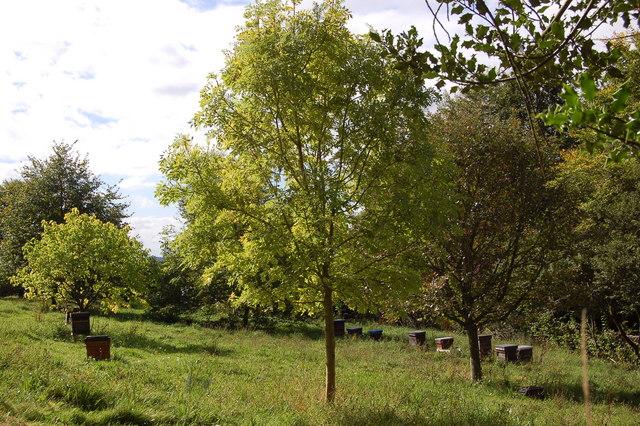 Beehives at the Kymin