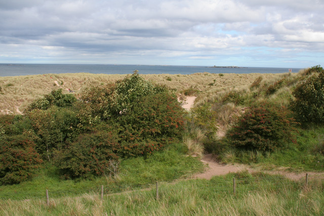 Dunes near Bamburgh Castle