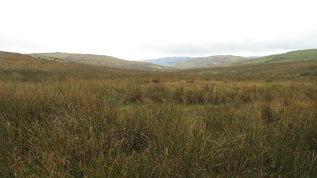 Wet land, on Grey Hill
